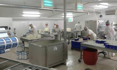 Mitarbeiterinnen bei der Produktion von Feta in der Molkerei in Griechenland.