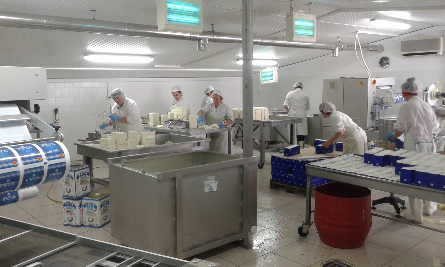 Employee producing feta in dairy located in Greece.